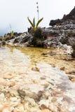 Montering Roraima Royaltyfri Fotografi