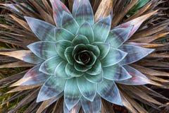 Montering Roraima Royaltyfria Bilder