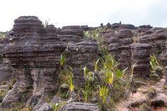 Montering Roraima Fotografering för Bildbyråer