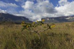 Montering Roraima och Kukenan Tepui arkivbilder