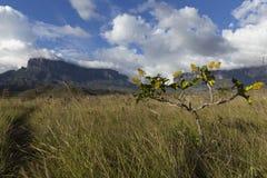 Montering Roraima och Kukenan Tepui royaltyfri fotografi
