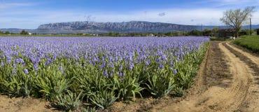Montering Sainte Victoire och blommor Royaltyfri Bild