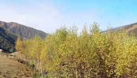 Montering Siguniang i Sichuan, Kina Royaltyfria Foton