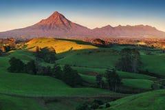 Montering Taranaki under den blåa himlen med gräsfältet och kor som en förgrund i den Egmont nationalparken Symmetrisk vulkan royaltyfria foton