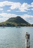 Monteringen på Tauranga i NZ Arkivbilder