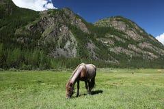 MonteringsAltai statlig naturlig Biospheric reserv, Ryssland Arkivbild