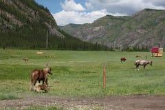 MonteringsAltai statlig naturlig Biospheric reserv, Ryssland Royaltyfri Bild