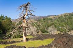 MonteringsEtna vulkan i uppgift Fotografering för Bildbyråer