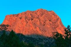 Monteringsfalk på solnedgången royaltyfri foto