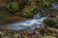 Monteringsskogvattenfall Arkivfoto