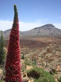 MonteringsTeide blom- landskap Royaltyfria Bilder
