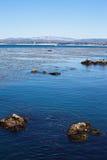 Monterrey Bay California. Wildlife, otters, and boats on the Monterrey Bay in California Stock Photography