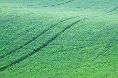 Montes abstratos e campos da grama verde Foto de Stock