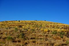 Montes amarelos de Spinifex Imagem de Stock Royalty Free