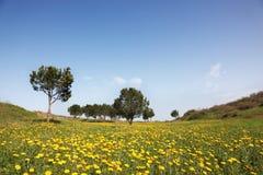 Montes cénicos e oliveiras Fotografia de Stock Royalty Free