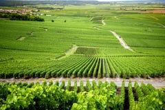 Montes cobertos com os vinhedos na região do vinho de Champagne, França imagens de stock