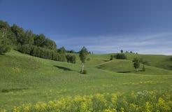 Montes com grama e árvores Fotografia de Stock Royalty Free