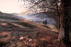 Montes da montanha do amanhecer fotos de stock royalty free