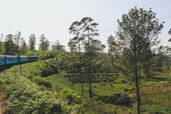 Montes da plantação de chá em Sri Lanka Visto durante o passeio do trem de Kandy a Ella em Sri Lanka foto de stock