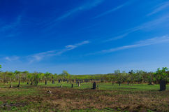 Montes da térmita no parque nacional de Litchfield Fotos de Stock
