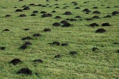 Montes da toupeira Imagens de Stock