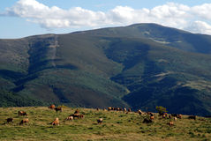 Montes de利昂 免版税库存照片