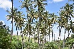 Montes de Horsley, Andhra Pradesh, Índia Imagens de Stock