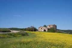 Montes de Toscânia com uma exploração agrícola em um campo amarelo Fotos de Stock Royalty Free