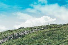 Montes delicados coloridos Foto de Stock