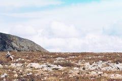 Montes delicados coloridos Imagem de Stock Royalty Free