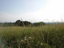 montes do campo Foto de Stock