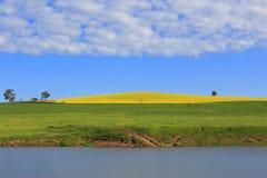 Montes do Canola e pastos da pastagem Imagem de Stock Royalty Free