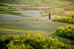 Montes do Chianti com vinhedos e cipreste Paisagem de Tuscan entre Siena e Florença Italy fotos de stock royalty free