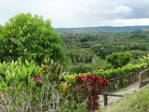 Montes do chocolate, ilha de Bohol, Filipinas Fotografia de Stock Royalty Free