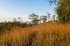 Montes do outono Foto de Stock