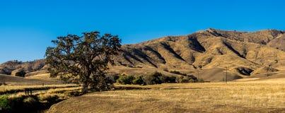 Montes dourados com carvalhos Fotografia de Stock Royalty Free