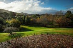 Montes e árvores em jardins botânicos elevados da montagem Imagens de Stock