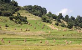 Montes e prados da Ucrânia ocidental Fotos de Stock Royalty Free
