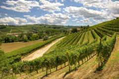 Montes e vinhedos de Piedmont, Italy. Imagem de Stock