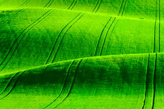 Montes ondulados verdes em Moravia sul Foto de Stock Royalty Free
