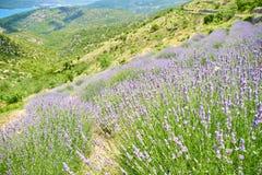 Montes perto de Brusje, Hvar, Croácia imagem de stock royalty free