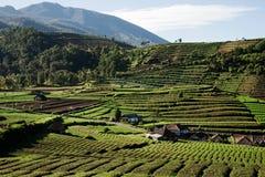 Montes verdes com campos da plantação e algumas casas cercadas por montanhas em Indonésia Imagem de Stock