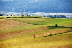 Montes verdes da mola em Eslováquia Campo ensolarado de abril imagem de stock royalty free