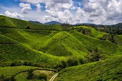 Montes verdes de rolamento de plantações de chá Fotografia de Stock