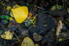 Montescudaio, Πίζα, Ιταλία - 19 Οκτωβρίου 2017 - πεσμένα φύλλα, γεια Στοκ Φωτογραφία