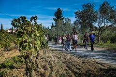 Montescudaio Pisa, Italien - Oktober 19, 2017 - fotvandrare promenerar Arkivfoton