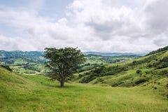 monteverde над взглядом стоковая фотография rf