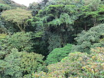 Monteverde cloud forest Stock Photography