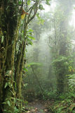 Monteverde Cloud Forest Nature Preserve - Costa Ri Royalty Free Stock Photos