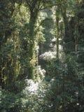 Monteverde, Costa Rica Images libres de droits